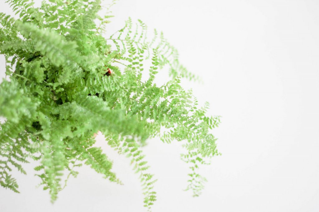 ferns and interior well-being